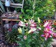Garten Margerite Frisch Das Morgendliche Ritual ist Beendet Gießen 😎 Jetzt Einen
