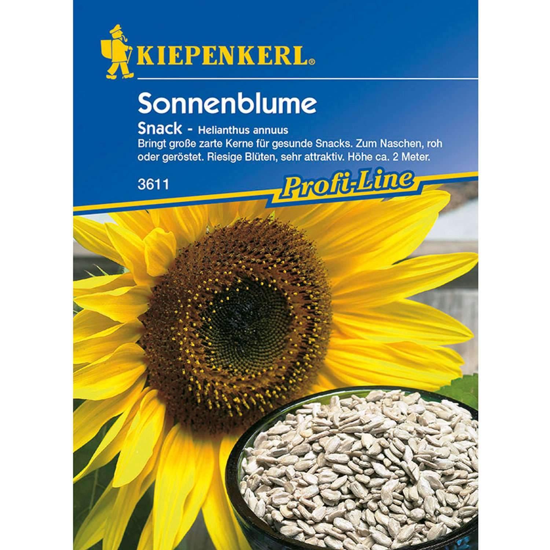 1 Sonnenblume Snack Helianthus annuus 1280x1280 2x