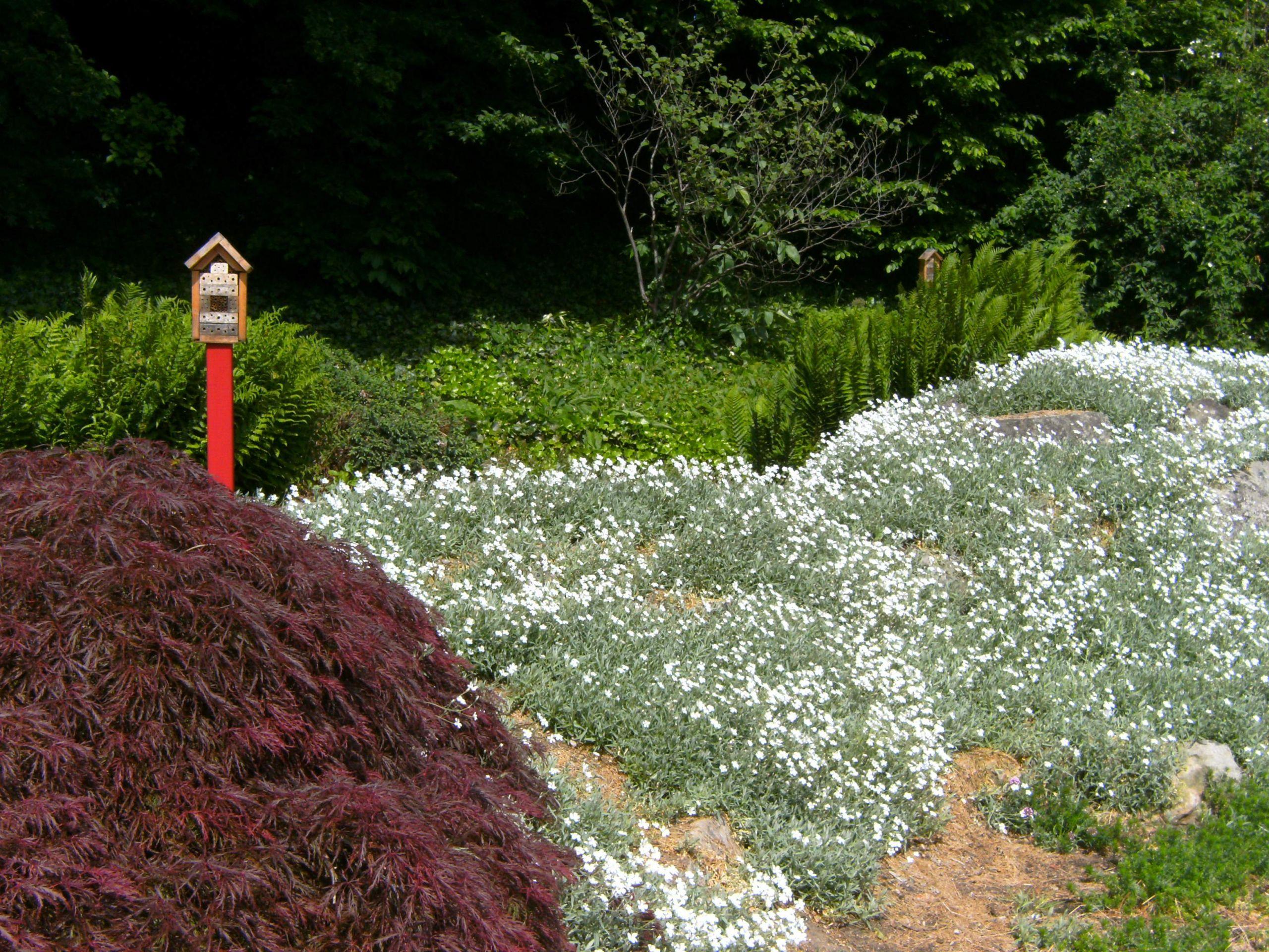Hamburg botanischer sondergarten wandsbek pfad blumen insektenhaus JPG