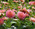 Garten Moorriem Das Beste Von Essbare Blüten Frisch Aus Dem Garten Genießen · Das