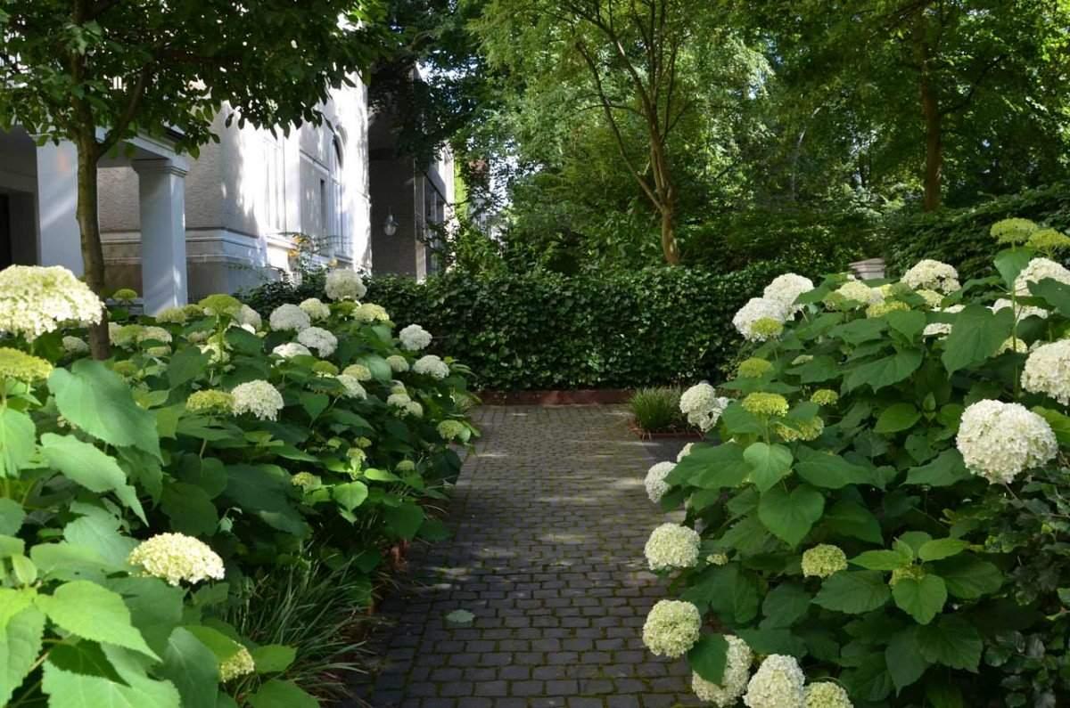 Garten von Ehren Vorgarten C Weg Efeu 1200x1200