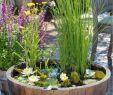 Garten Oase Inspirierend Miniteich Anlegen – 37 Kleine Oase Auf Dem Balkon