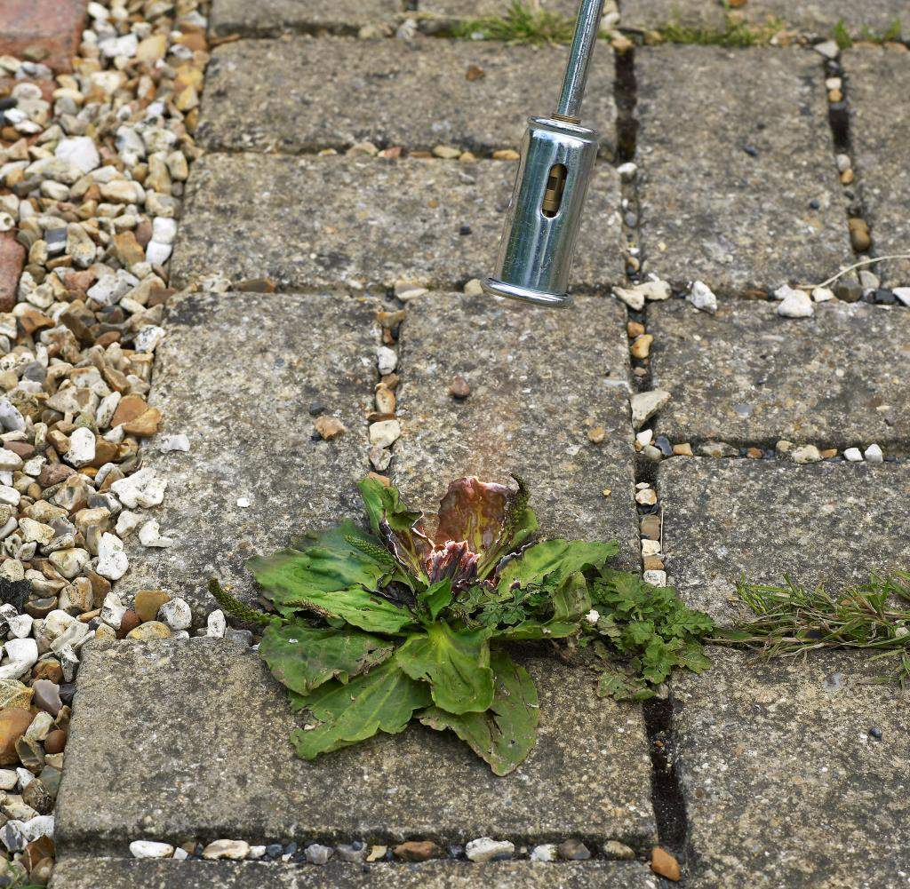 Using a flameweeder to remove weeds in the gaps between paving st