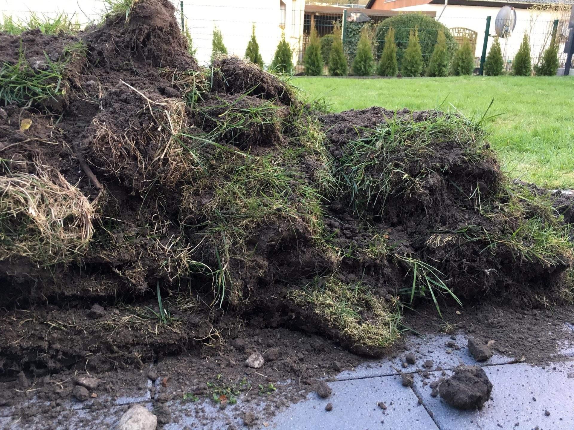 Garten Ohne Rasen Alternativen Zum Rasen Inspirierend Rasen Fräsen Oder Abtragen Was Verspricht Mehr Erfolg