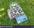 Garten Ohne Rasen Alternativen Zum Rasen Neu Krokuszwiebeln Im Rasen Zu Pflanzen Stockfoto Bild