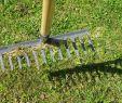 Garten Ohne Rasen Alternativen Zum Rasen Neu Rasenpflege Richtig Vertikutieren Mit Dem Passenden Gerät