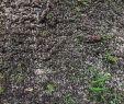 Garten Ohne Rasen Alternativen Zum Rasen Reizend Rasen Säen Wann ist Denn Der Richtige Zeitpunkt