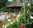 Garten Pavillons Frisch Datei Augsburg Bot Garten Am Rosenpavillon –