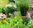 """Garten Planer Das Beste Von Wie Man Ihren Eigenen Kr""""utergarten Macht"""
