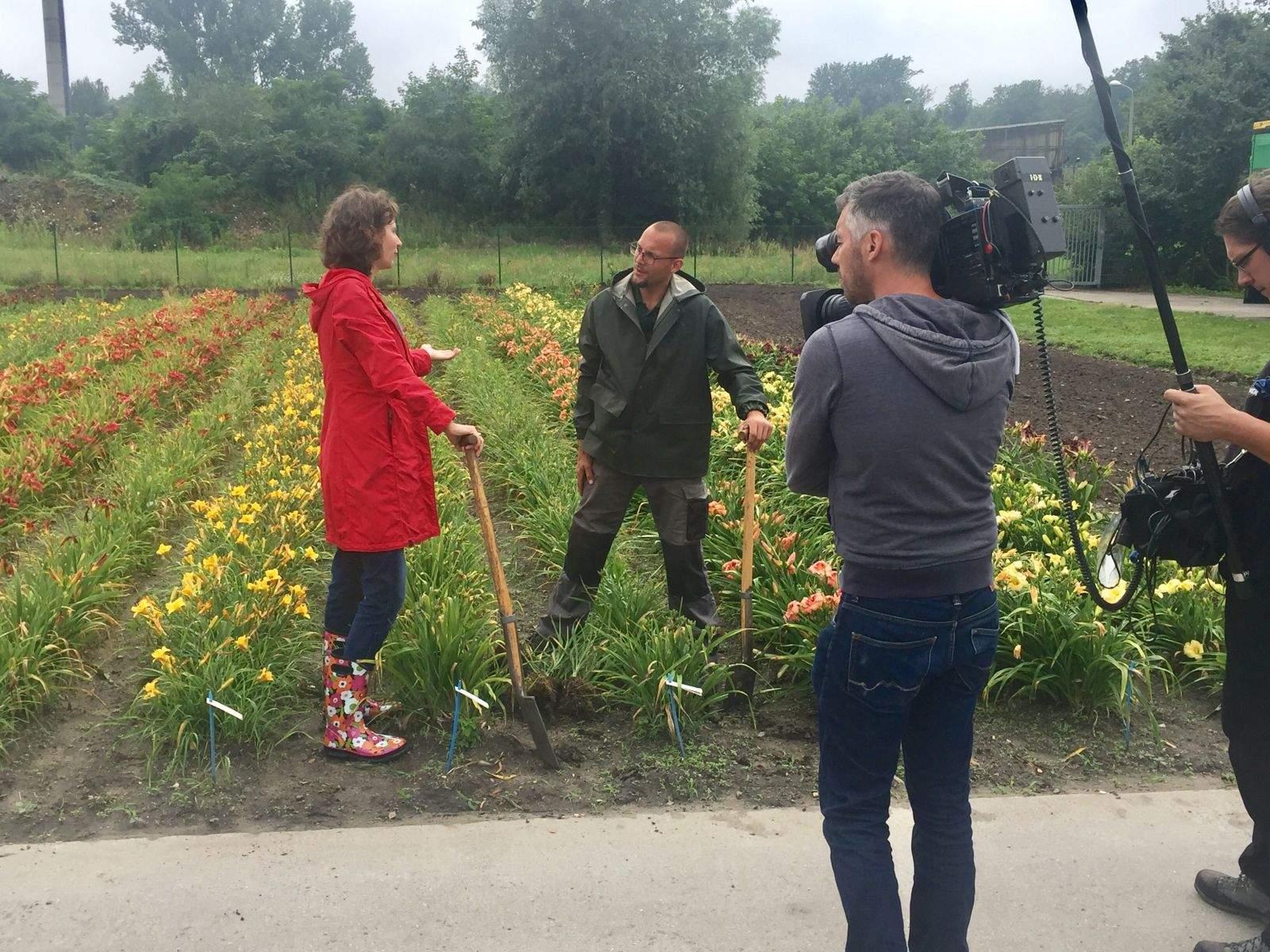 ZDF moma Teilung web