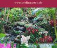 Garten Potsdam Genial orchideenpflege Richtig Gemacht Tipps Vom Profi Der