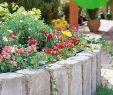 Garten Rasen Genial Rasenkantensteine Setzen Rasenpflege