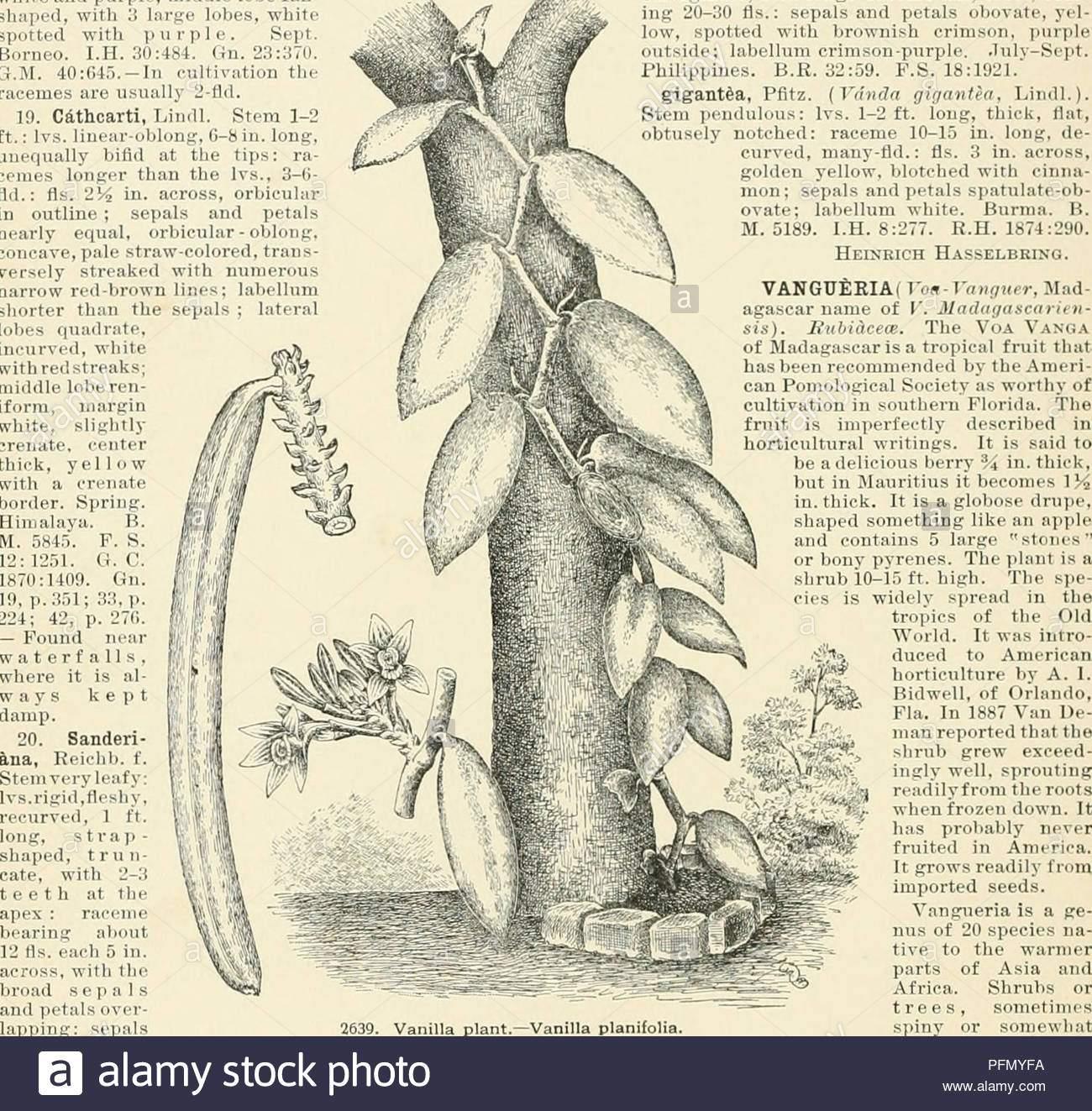 cyclopedia der amerikanischen gartenbau bestehend aus anregungen fur den anbau von gartenpflanzen beschreibungen der arten von obst gemuse blumen und zierpflanzen in den vereinigten staaten und in kanada verkauft zusammen mit geographischen und biographische skizzen im garten arbeiten 1900 vanda sept buimi b m 4114 br pm t iit k h ihib 41 bt4j1404 i c 11 20 273 iii 27 su7 sh2 j8o auf 42 87 ba punt von stiikglmg gewohnheit aber mit sehr schonen hs u andersoni hort hat lis grosser und mehr bunte ist hookeri na kiahb f stammzellen und ivs terete als ml 111 ich tt ronly 2 jm lonff und bl pfmyfa