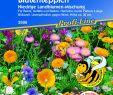 Garten Ringelblume Frisch Blütenteppich Niedrige Landblumen Mischung
