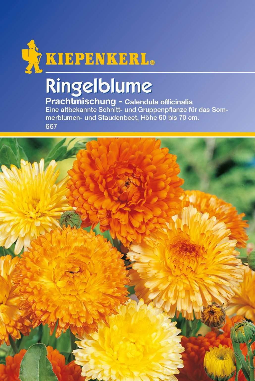Garten Ringelblume Luxus Kiepenkerl Ringelblume Prachtmischung Calendula Officinalis