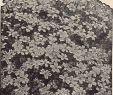 Garten Ringelblume Neu 4 M Schoner Stockfotos & 4 M Schoner Bilder Alamy