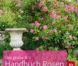 Garten Rosen Reizend Das Große Blv Handbuch Rosen