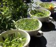 Garten Salbei Schneiden Genial Yauhtli Pflanze Ta Es Ta Es Tuberose