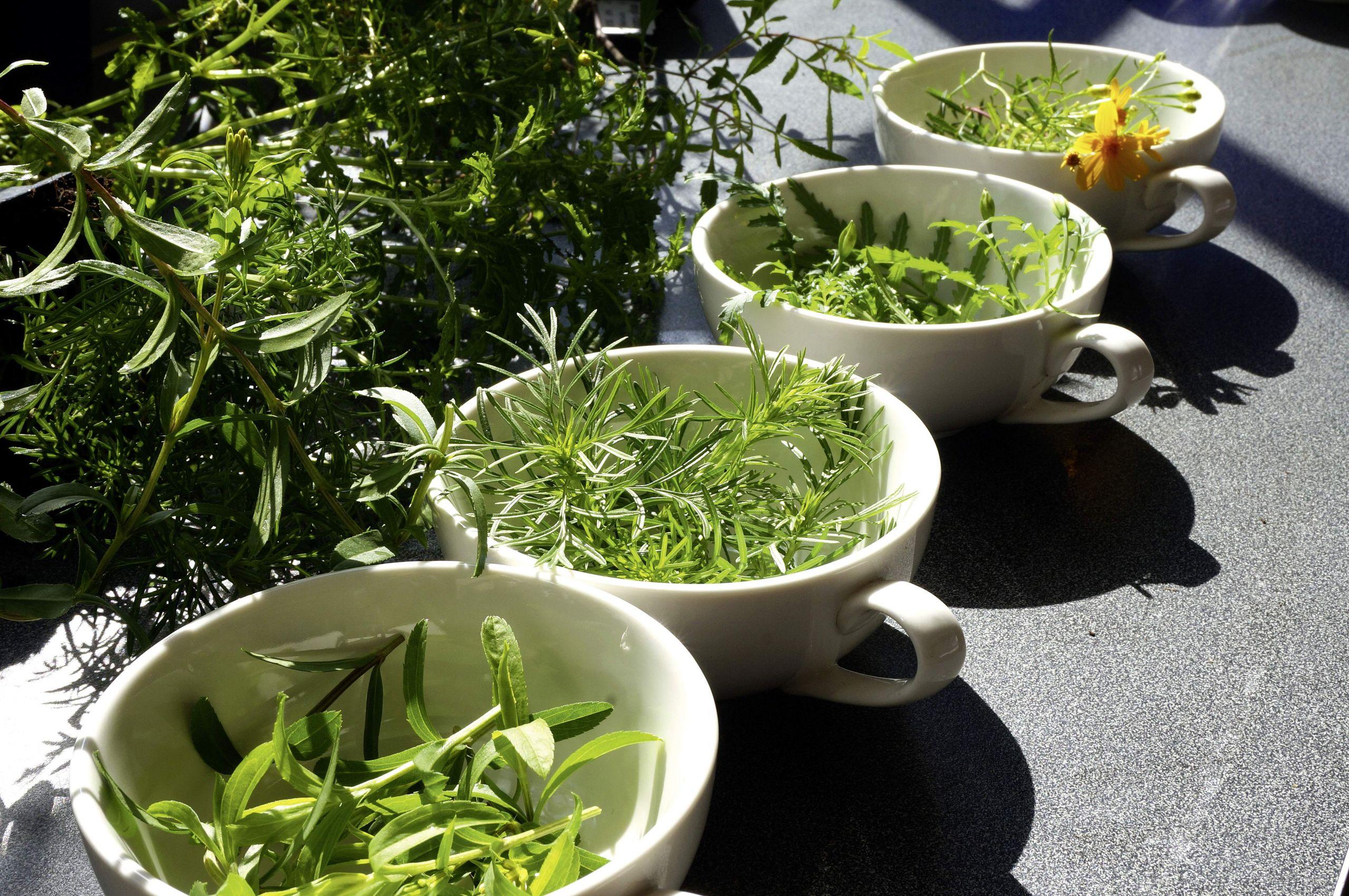 Teepflanzen DSC