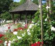 Garten Set Frisch Datei Augsburg Bot Garten Am Rosenpavillon –