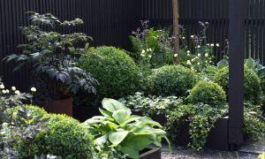 40 Luxus Garten Sichtschutz Günstig Reizend