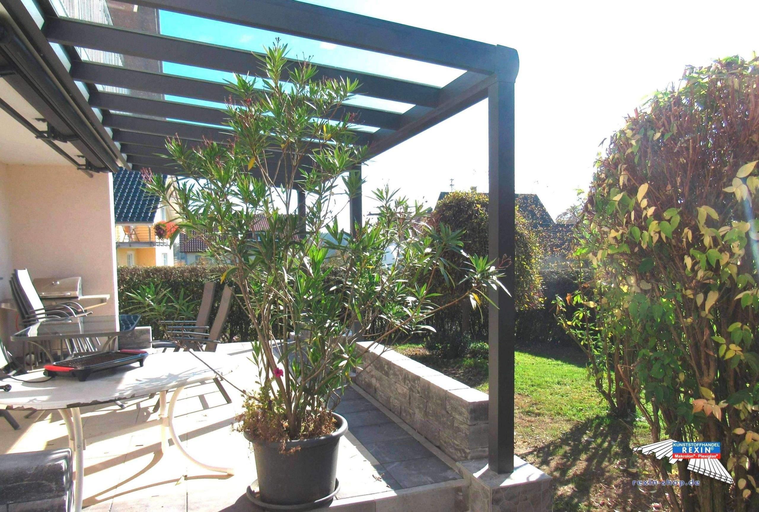 Garten Sichtschutz Pflanzen Inspirierend 30 Reizend Wohnzimmer