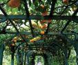 Garten Spalier Elegant Machen Sie Sich Bereit Für Das Leben Im Freien tolle Idee