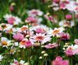 Garten Stiefmütterchen Elegant Diese 16 Pflanzen Sind Ungefährlich Für Deine Katze Watson
