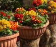 Garten Stiefmütterchen Luxus Diese 16 Pflanzen Sind Ungefährlich Für Deine Katze Watson