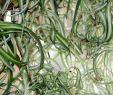 Garten Stiefmütterchen Reizend Diese 16 Pflanzen Sind Ungefährlich Für Deine Katze Watson