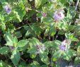 Garten Stiefmütterchen Schön Diese 16 Pflanzen Sind Ungefährlich Für Deine Katze Watson
