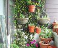 Garten überdachung Frisch 27 Luxus Garten Büsche Schön
