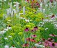 Garten Und Landschaftsbau Duisburg Genial Garten Und Landschaftsarchitekt — Temobardz Home Blog
