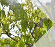 Garten  Und Landschaftsbau Wiesbaden Genial Bis Zu 30 Rabatt Auf solitärgehölze Aktuell Findest Du In