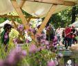 Garten  Und Landschaftsbau Wiesbaden Neu 4974 Best Gartenbau Images