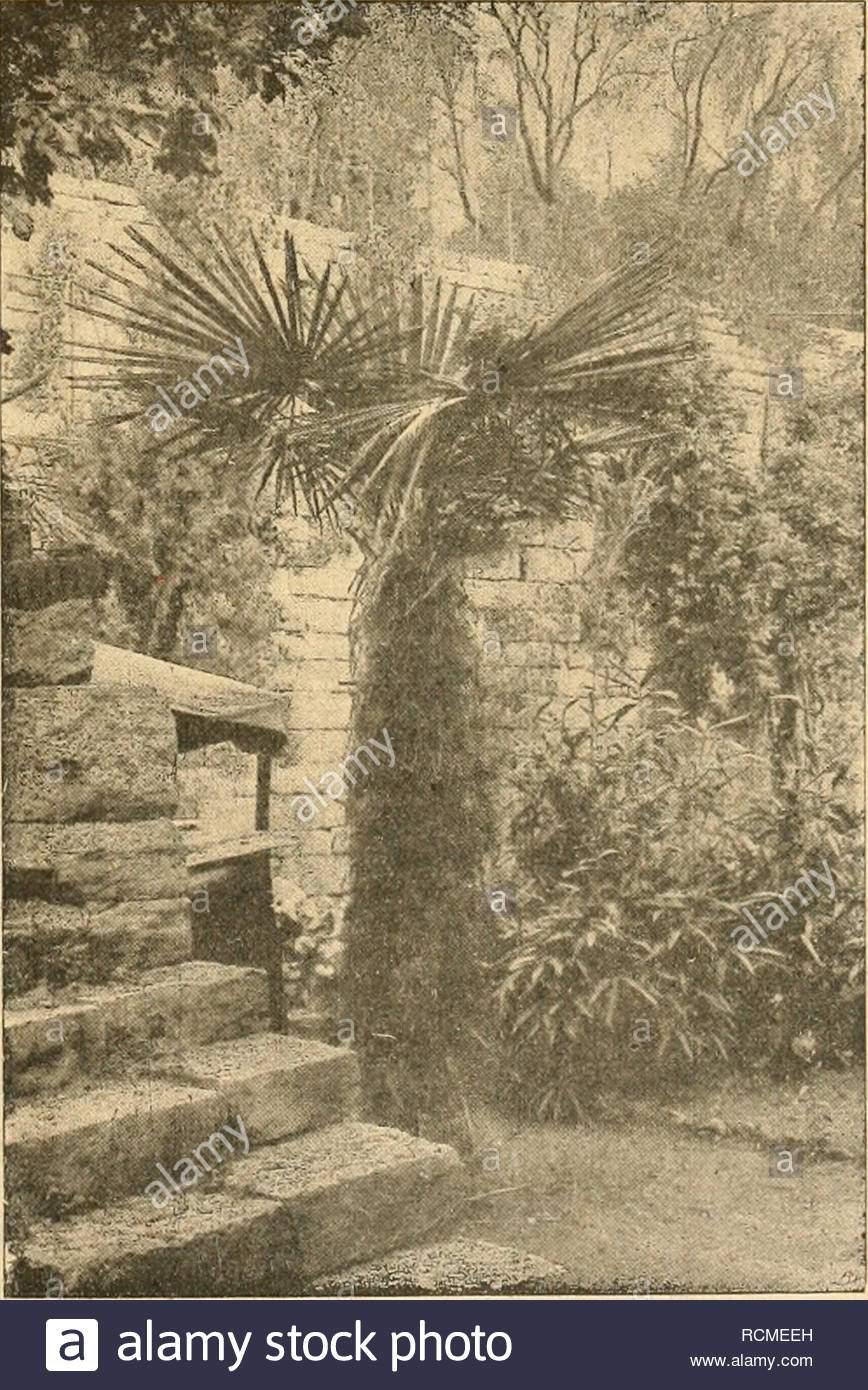 gartenwelt gardening illustrierte wochenschrift fr den gesamten gartenbau jahrgang xxiii 3 januar 1919 nr 1 v nachdruck und nachbildung aus dem inhalte ser zeitschrift merden strafrechtlich verfolgt palmen ueberwinterung von palmen im freien hierzu zwei abbildungen nach fr gartenweltquot gef aufn in seinen schnen palmenaufstzen hat alwin berger darauf aufmerksam gemacht da mehrere palmenarten bei uns mit guter schutzhlle im freien berwintert werden knnen am meisten ist das bis jetzt mit der so harten hanfpalme trachycarpus excelsa gelungen in stutt RCMEEH