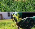 Garten Vertikutieren Inspirierend Probleme Im Rasen Zuerst Der Winter Dann Der Heiße sommer