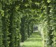 Garten Von Ehren Schön Rotbuche • Fagus Sylvatica