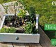 Garten Wappenblume Genial 40 Neu Garten Wappenblume Frisch