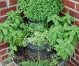 Gestaltung Kleiner Garten Das Beste Von 27 Luxus Garten Büsche Schön