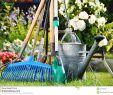 Gießkanne Garten Frisch Gießkanne Und Werkzeuge Im Garten Stockbild Bild Von