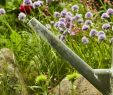 Gießkanne Garten Inspirierend so Bewässern Sie Ihren Garten Richtig