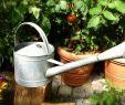 Gießkanne Garten Schön Verzinkte Gießkanne Für Den Garten Blumen Gießkanne