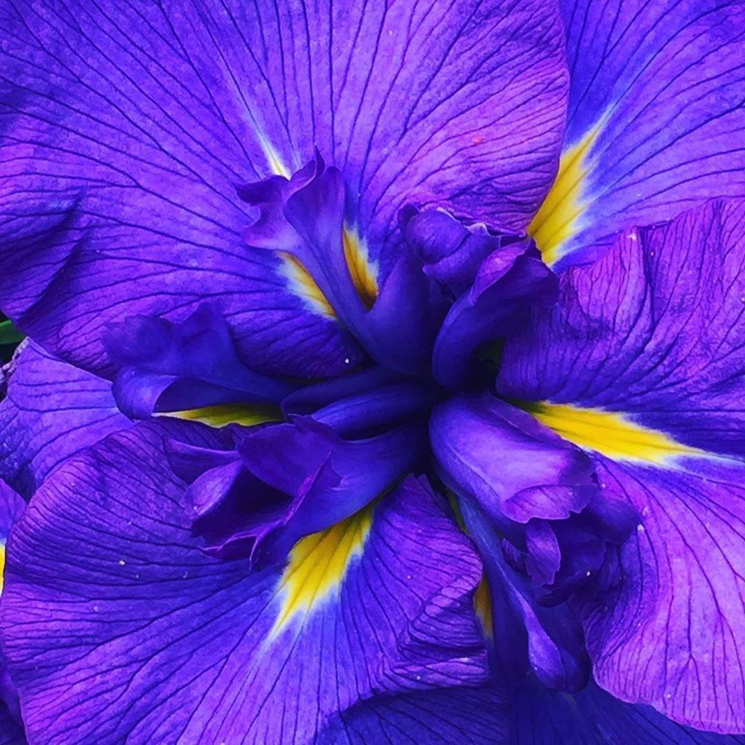 garten ringelblume reizend so beautiful flowers beautiful garden hester be of garten ringelblume