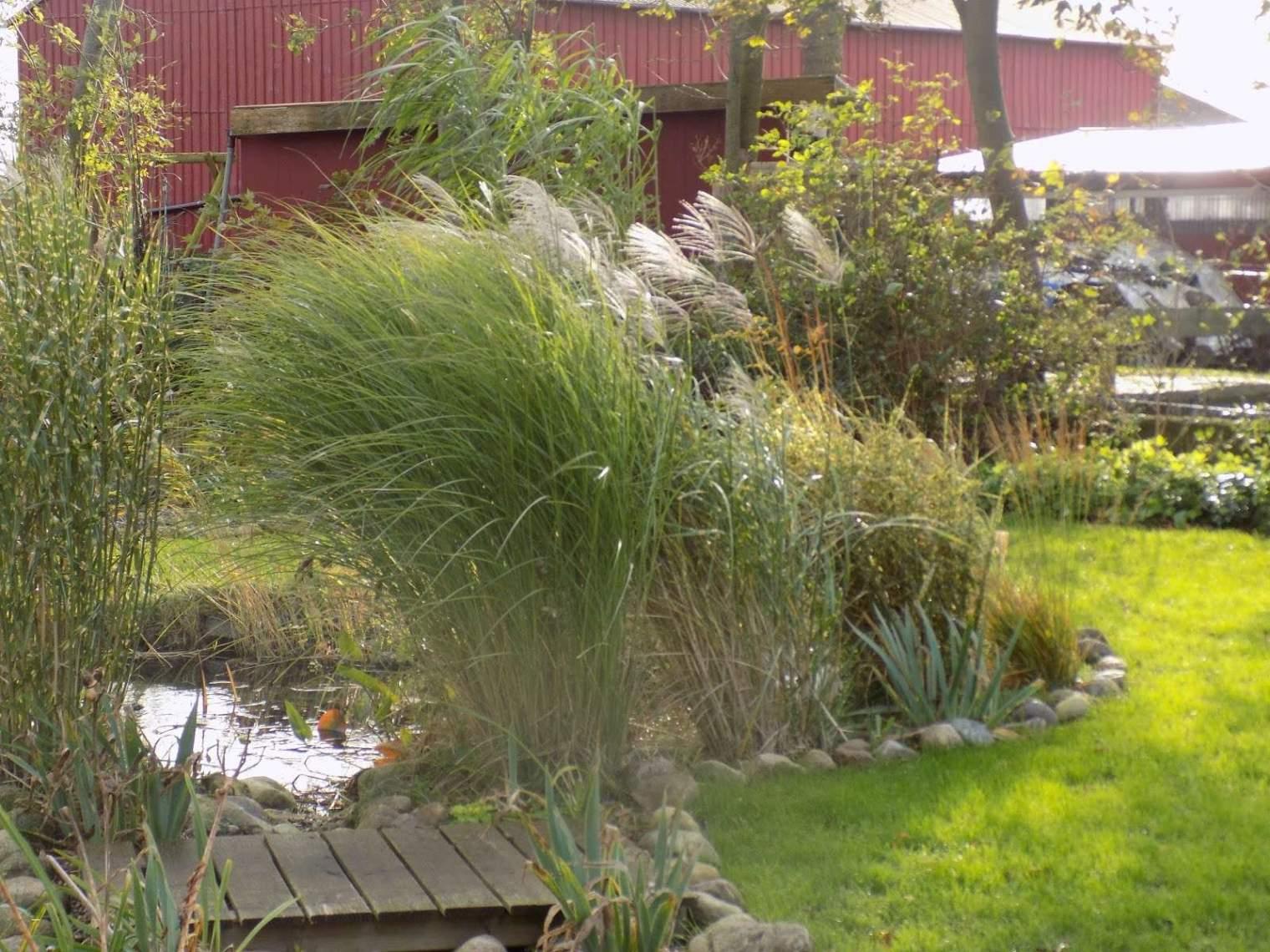 33 elegant graser im garten als sichtschutz winterharte graser garten winterharte graser garten 1