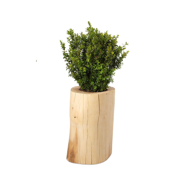 Möbelmanufaktur GreenHaus Baumstamm Pflanzkübel Buche geölt3