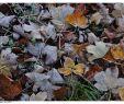Häcksler Garten Neu Hohenaspe Eine Gemeinde Stellt Sich Vor November 2011