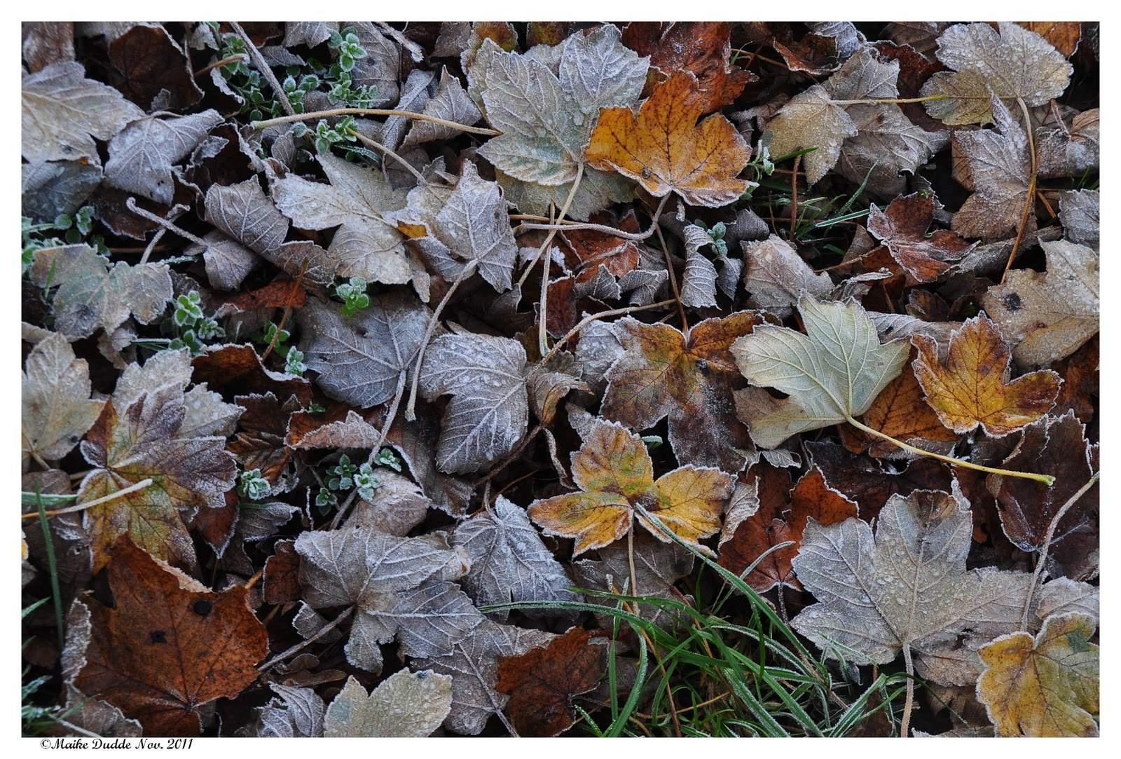 Blätter im Nov