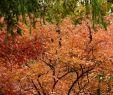 Herbst Garten Das Beste Von Der Garten Im Herbst Herbst Das Gartenjahr