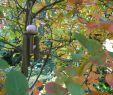 Herbst Garten Luxus Im Gedenken An Florian Im Herbst